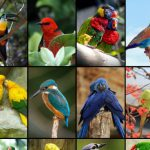 Image That Showing The Portraits of Beautiful and Colorful Pet Birds Collection.
